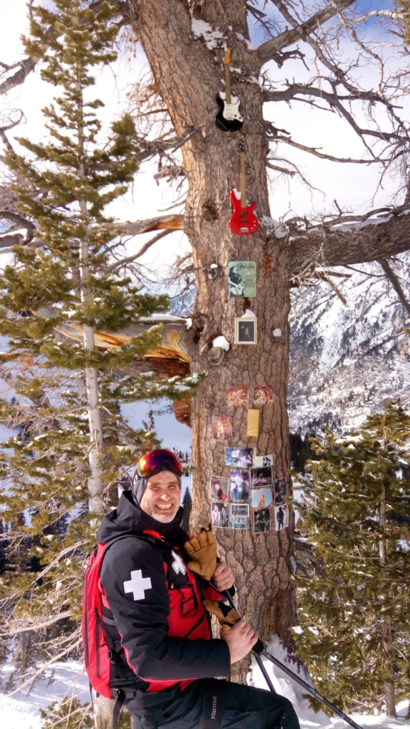 Bruce Springsteen's tree